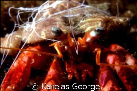 crab,Peloponnese,Greece,Nikonos V macro1:3 by KARELAS GEORGE