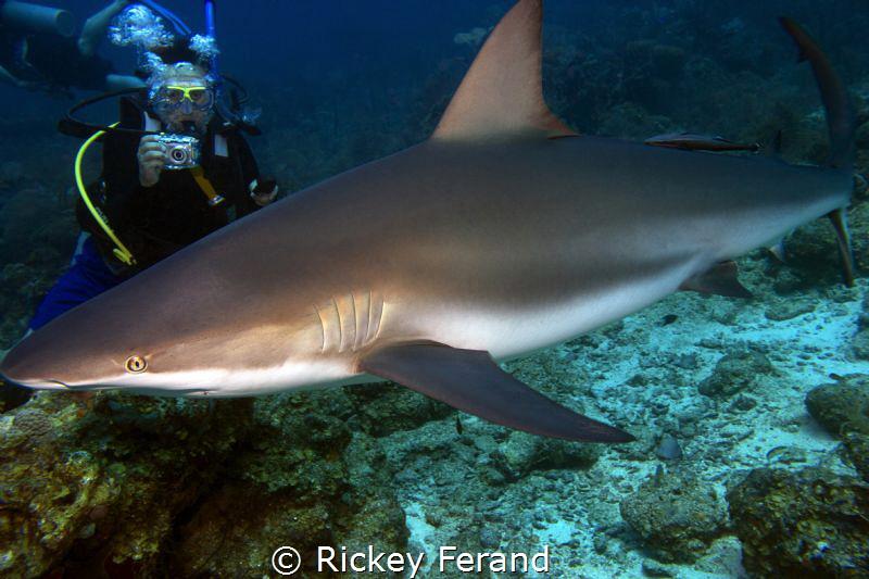 Shark Dive in Roatan by Rickey Ferand
