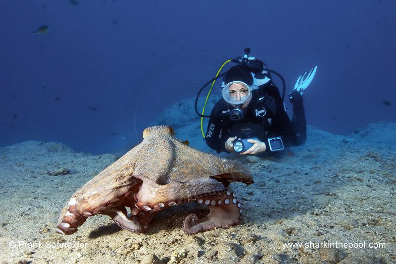 Model and octopus; Model: Ines; Nikon D3, Zoom f2.8/14-24... by Frank Schneider