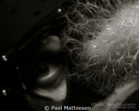 Eye by Paal Mathiesen