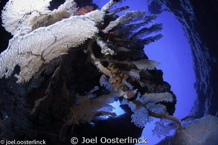 gorgones cirque des aigrettes by Joel Oosterlinck