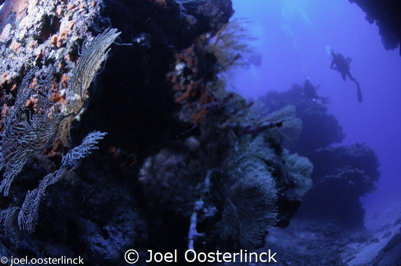 gorgones by Joel Oosterlinck
