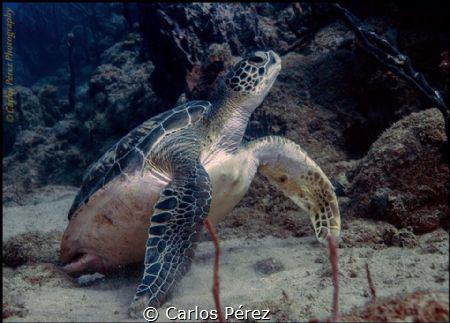 Back in Home.. Returning to dive from a little health per... by Carlos Pérez