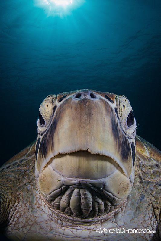 Turtle fashion week portrait by Marcello Di Francesco