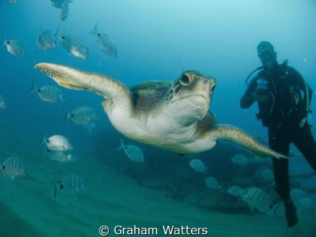 A Turtle From Tenerife by Graham Watters