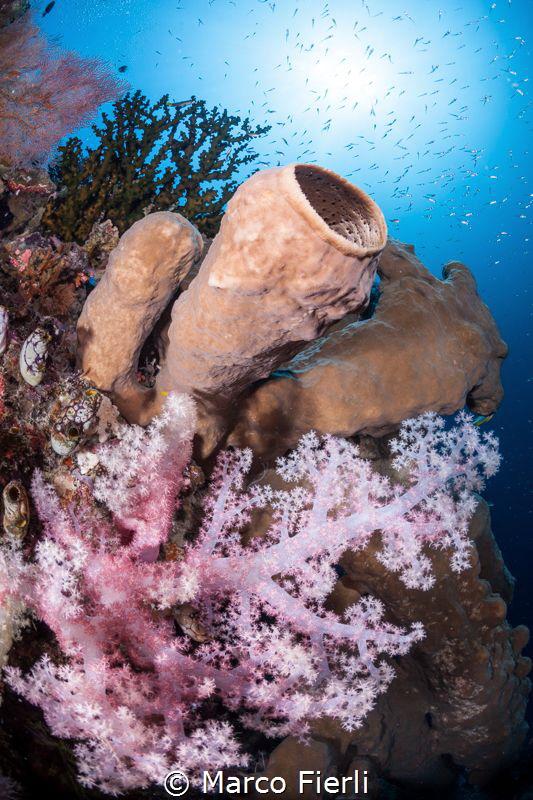 The Reef at Wakatobi by Marco Fierli