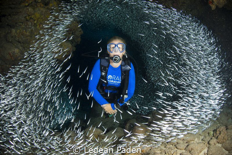 Silversides and A Diver in Grand Cayman by Ledean Paden