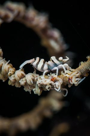 Spirals by Steven Miller