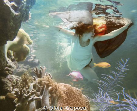 The Little Mermaid by Viola Krupova