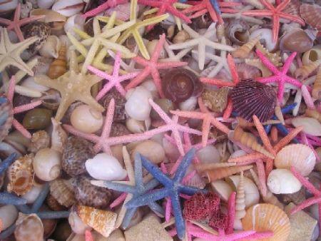 Seastars and shells in Simi, Greece by Gordana Zdjelar