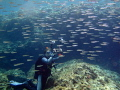 Scuba inside a school of fish
