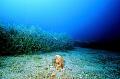 Pantelleria Pinna Nobilis Marine Life Wide Angle