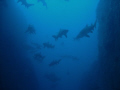 Sharks everywhere!!! My favourite dive site. Good conditions and tons of grey nurse sharks! Awesome!