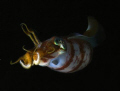 Night dive Crash Boat  canon g9 inon strobes
