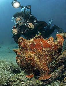 Red frogfish and photographing diver; Sabang beach, shallow water, Nikonos RS, Fisheye, Flash Nikon SB104 - Model: Leda