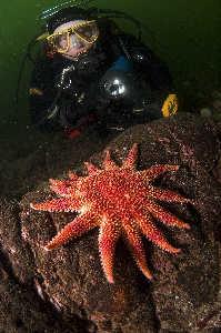 Diver viewing vibrant sunstar. nikon d70 with 10.5mm lens. St. Abbs Scotland