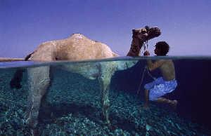 camel's safari