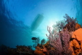 """This view coral reef Cabo Pulmo National Park one most successful marine reserves world. Cousteau once called aquarium world world"""". world"""""""