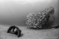 Shot fragment El Vencedor shipwreck Cabo Pulmo National Park Mexico. Mexico
