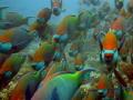 School parrots Kuramathi Maldives