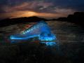 overunder bluebottle physalia physalis love how pneumatophore air bladder this caught light my underwater strobe lit like fluorescent tube Amazing over/under under