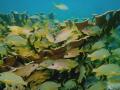Somberro Reef Marathon Key