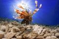 Just lionfish. lionfish