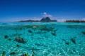 Attempt mid waterair photo while Lagoon Bora Bora. water/air water air