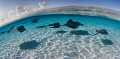 Flight SchoolSandbar stingrays Grand Cayman