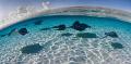 Flight SchoolSandbar stingrays Grand Cayman