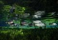 This Pic was taken Blue Spring near Bonito Brazil Nikon D7000 Seacam Housing Tokina 1017mm. nice Fish Brycon hilarii also called Piraputanga 10-17mm. 10-17mm 10 17mm.