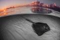 Amazing day Stingray SandbarChanged bottom bw thats real sunrise reflection