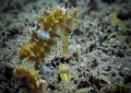 Princely Pose finally had my choice sea horses shoot Dumaguete Philippines this one stole heart love his attitude coloring