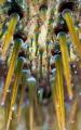 Sea Urchin closeup close-up close