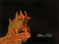 NDragon Shrimp