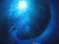 Jackfish swarm diver
