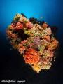 Maldivian coral reef