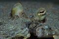 Flounder Closeup Close-up Close