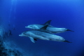 Wild dolphins encounter