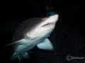 taken Aquarium Americas