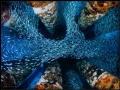 Title Rush HourSchooling Bait fish dancing around pilings Eureka Oil Rig