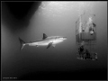 Title Two story apartment rent rough neighborhoodThis photo describes itself. Great White taken Guadalupe. itself Guadalupe