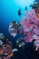 "Wrought iron butterflyfishEndemic species Japan.In Japan we call Yuzen. Japan. ""Yuzen"". ""Yuzen"""
