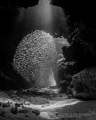 wish Cayman grottoes would be filled silversides once more.Devils Grotto July 2013 last year big numbers more. more