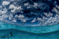 Overunder image. great Barracuda entered frame while was taking this shot Bonaire. image Bonaire