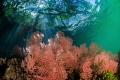 Connecting when trees meet ocean