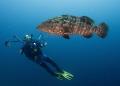 Grouper model photographer