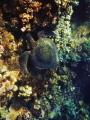 Heart Turtles