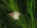 Snail Swiss Lake Vierwaldstttersee