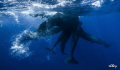 diver enters confidence...will they accept her confidencewill confidence will